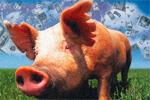 featured-pork-spend-cash