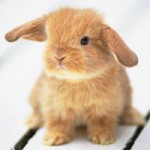 square-bunny-rabbit
